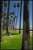 Man with bicycle laying on grass bellow beachside palm trees. Santa Barbara, California, USA ( color)