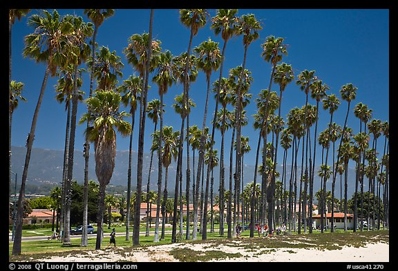 Beachfront and tall palm trees. Santa Barbara, California, USA
