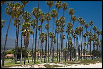 Beachfront and tall palm trees. Santa Barbara, California, USA ( color)