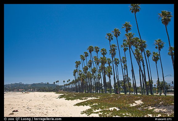 East Beach and palm trees. Santa Barbara, California, USA (color)