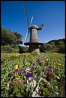 Spring flowers and old windmill, Golden Gate Park. San Francisco, California, USA