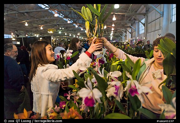 Woman buys orchid plant, Mason Center. San Francisco, California, USA
