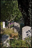 Headstones in the garden of Mission San Francisco de Asis. San Francisco, California, USA