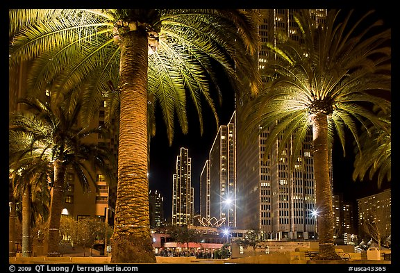 Palm trees and Embarcadero Center at night. San Francisco, California, USA