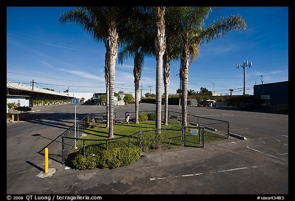 Tiniest park with grass and palm trees, Bergamot Station. Santa Monica, Los Angeles, California, USA (color)