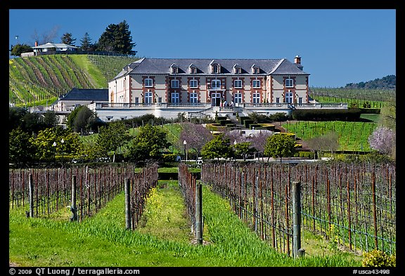 Vineyard and chateau style winery in spring. Napa Valley, California, USA (color)