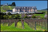 Vineyard and chateau style winery in spring. Napa Valley, California, USA