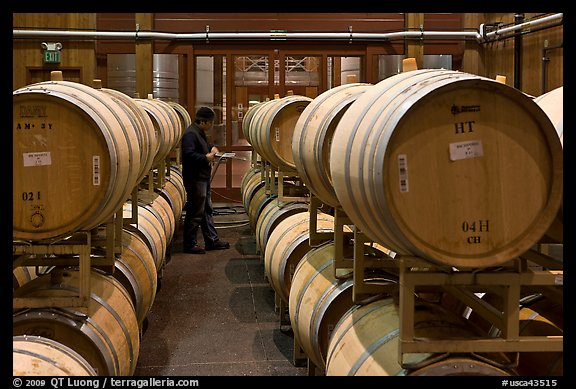 Winemaker checking barrels of wine being aged. Napa Valley, California, USA (color)
