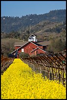 Winery landscape in spring. Napa Valley, California, USA (color)