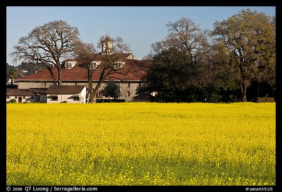 Field of yellow mustard and winery. Sonoma Valley, California, USA (color)