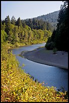 Eel River near Avenue of the Giants. California, USA ( color)