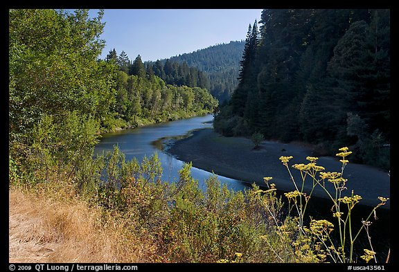 Riverbend of the Eel in redwood forest. California, USA (color)