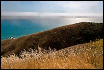 Summer grasses, hill, and ocean shimmer. Sonoma Coast, California, USA