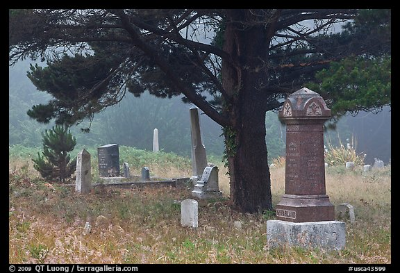Pine tree and tombs in fog, Manchester. California, USA