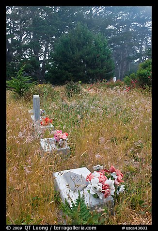 Graves in fog, Manchester. California, USA (color)