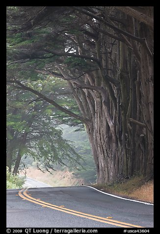 Highway curve, trees an fog. California, USA
