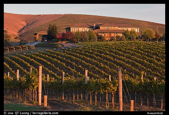 Vineyard and winery in autumn. Napa Valley, California, USA (color)