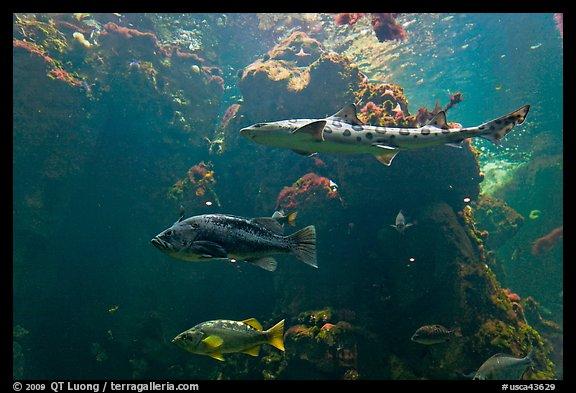 Northern California fish, Steinhart Aquarium, California Academy of ...