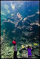 Children in front of Coral Reef tank, Steinhart Aquarium, California Academy of Sciences. San Francisco, California, USA ( color)