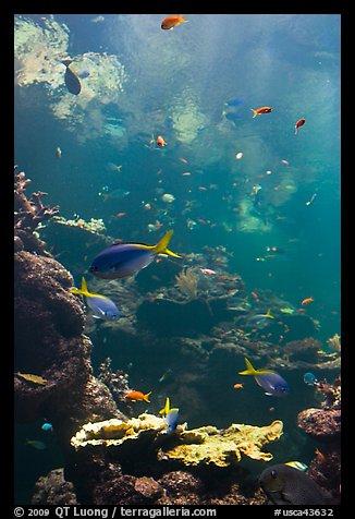 Picture Photo Philippine Coral Reef Exhibit Steinhart
