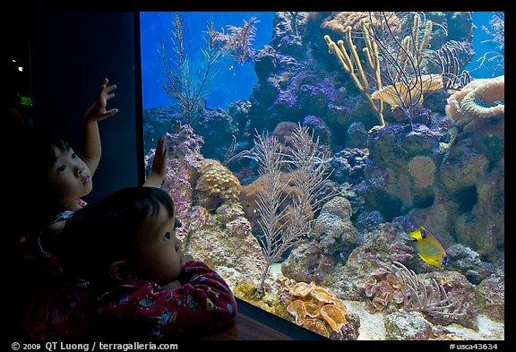 ... aquarium, California Academy of Sciences. San Francisco, California
