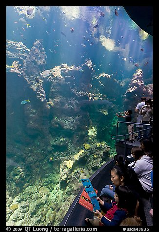Families look at the large  Philippine Coral Reef tank, California Academy of Sciences. San Francisco, California, USA (color)