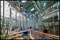 Piazza and 90 foot diameter glass dome housing spherical rainforest exhibit, California Academy of Sciences. San Francisco, California, USA<p>terragalleria.com is not affiliated with the California Academy of Sciences</p>