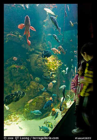 Children looking at colorful fish in tank, California Academy of Sciences. San Francisco, California, USA (color)