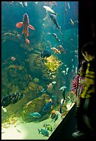 Children looking at colorful fish in tank, California Academy of Sciences. San Francisco, California, USA<p>terragalleria.com is not affiliated with the California Academy of Sciences</p> (color)