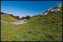 Living roof, California Academy of Sciences. San Francisco, California, USA<p>terragalleria.com is not affiliated with the California Academy of Sciences</p>