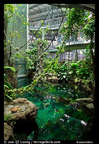 Inside rainforest dome, with flooded forest below, California Academy of Sciences. San Francisco, California, USA (color)