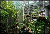 Four-story Rainforest exhibit, California Academy of Sciences. San Francisco, California, USA<p>terragalleria.com is not affiliated with the California Academy of Sciences</p>