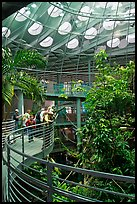 Visitors on spiraling path look at rainforest canopy, California Academy of Sciences. San Francisco, California, USA<p>terragalleria.com is not affiliated with the California Academy of Sciences</p> (color)