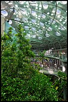 Domed rainforest, California Academy of Sciences. San Francisco, California, USA ( color)