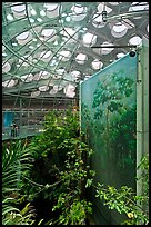 Rainforest canopy and dome, California Academy of Sciences. San Francisco, California, USA<p>terragalleria.com is not affiliated with the California Academy of Sciences</p> (color)