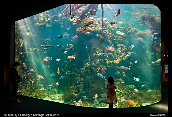 Picture Photo Girl Looks At Northern California Aquarium