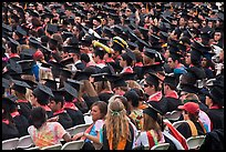 Graduates in academic regalia. Stanford University, California, USA (color)
