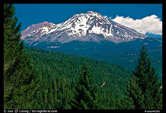 Forested slopes and Mount Shasta. California, USA (color)