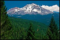 Forested slopes and Mount Shasta. California, USA