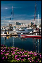 Flowers, Oakland skyline, and Alameda marina. Oakland, California, USA