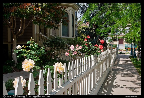 White picket fence and roses in Preservation Park. Oakland, California, USA (color)