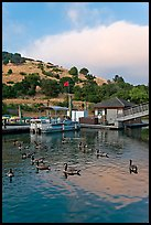 Ducks and marina at sunset, Lake Chabot Regional Park. Oakland, California, USA (color)