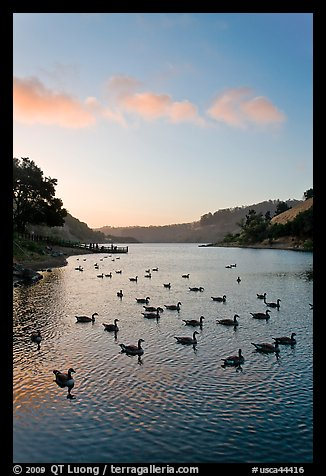 Lake Chabot with ducks at sunset, Castro Valley. Oakland, California, USA (color)