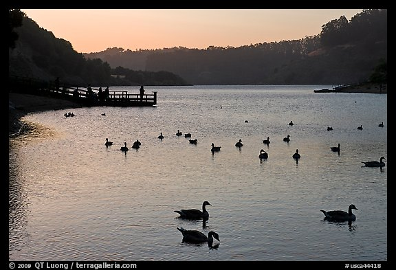 Ducks and pier at sunset, Lake Chabot, Castro Valley. Oakland, California, USA