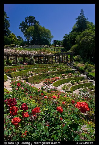 Picture photo formal gardens berkeley rose garden Berkeley rose garden