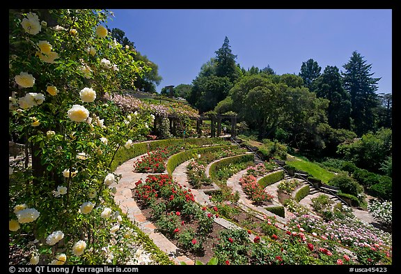 Municipal Rose Garden. Berkeley, California, USA