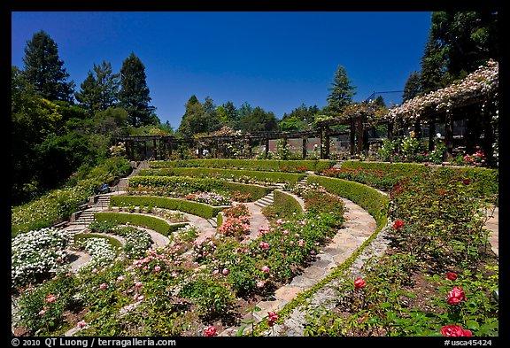 PicturePhoto Terraced Amphitheater Rose Garden Berkeley