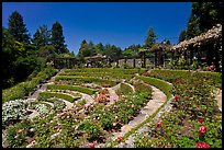 Terraced Amphitheater, Rose Garden. Berkeley, California, USA ( color)