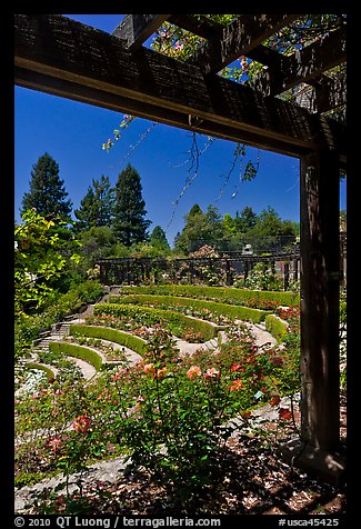 Berkeley Municipal Rose Garden. Berkeley, California, USA (color)