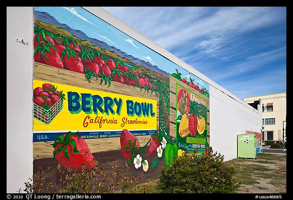 Wall with mural celebrating berry growing. Watsonville, California, USA (color)